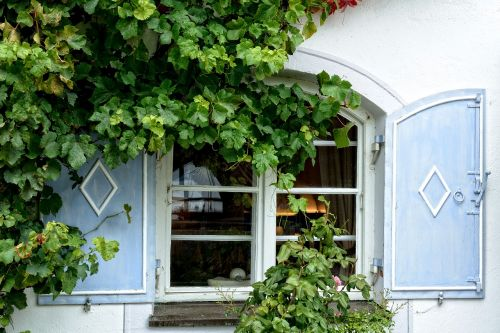 window facade plant