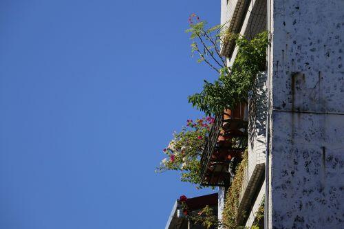 window sill plant sky
