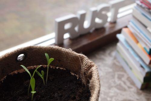 window sill plants grow