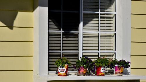 Window Sill Flowers