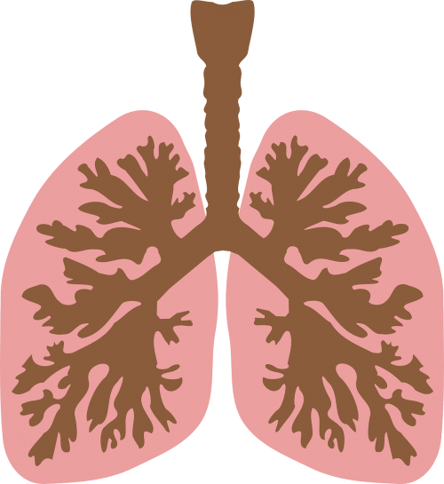 windpipe airway lungs
