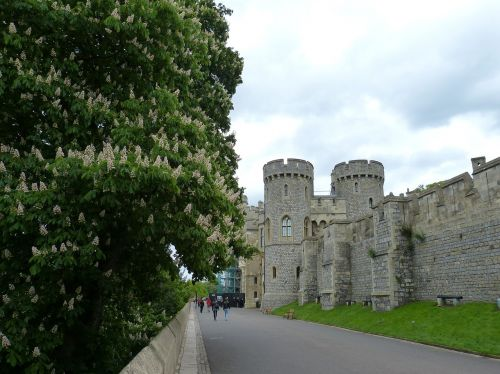 windsor,london,england,castle,windsor castle,united kingdom,architecture,middle ages,building,historically,tower,wall,tree,chestnut,bloom,places of interest,tourism,free photos,free images,royalty free