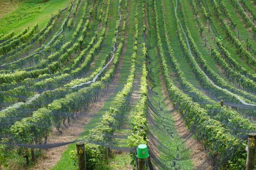 wine new zealand ranks