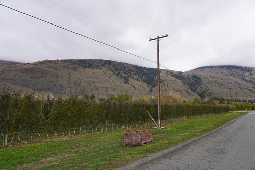 wine  wine making  osoyoos