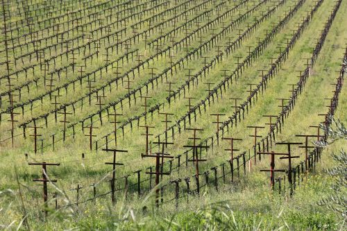 wine the vine winery