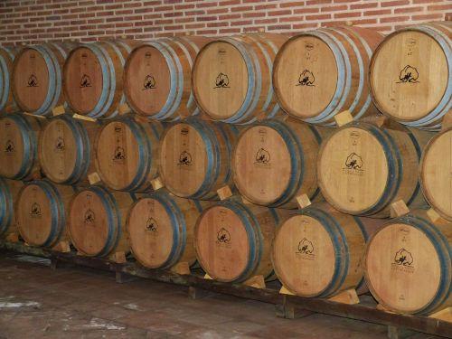 wine cellar wine barrels