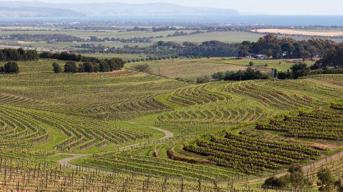 wine mclaren vale australia
