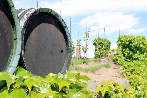 wine barrel barrel wine