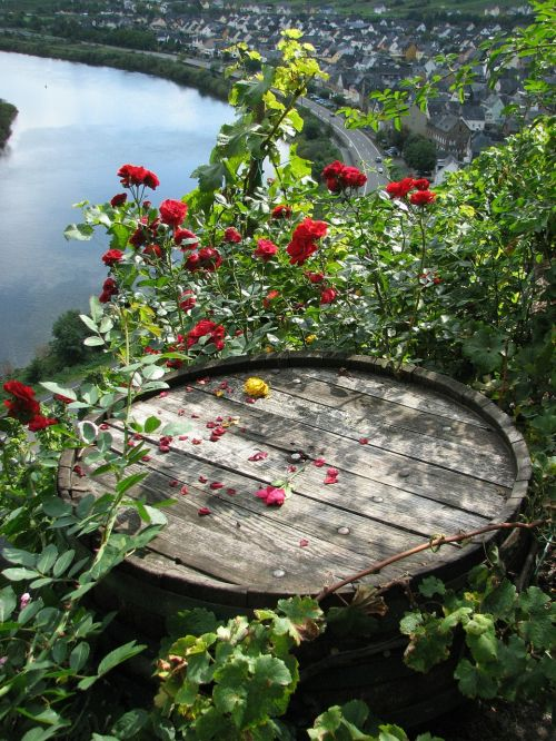 wine barrel roses mosel