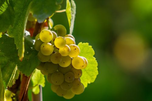 wine berries grapes berries