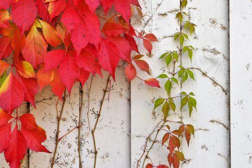 wine partner autumn wall