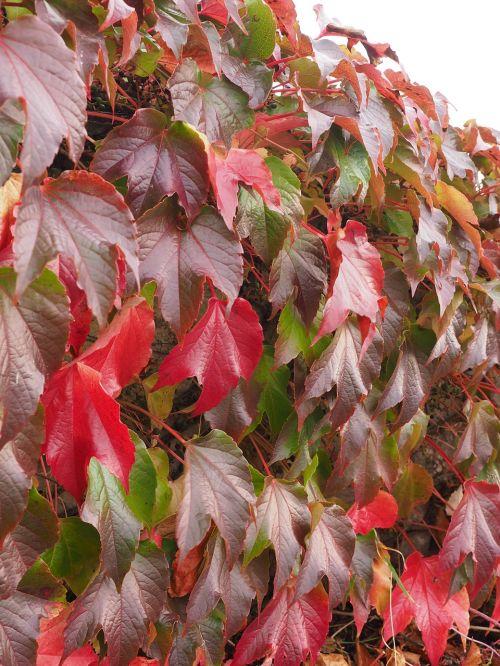 wine partner autumn leaves