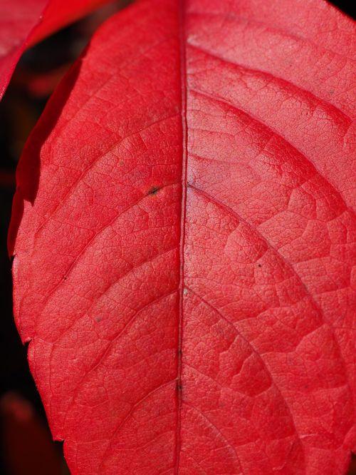 wine partner leaf red