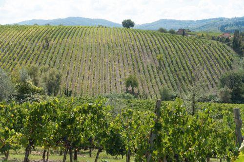 winegrowing vineyard vine