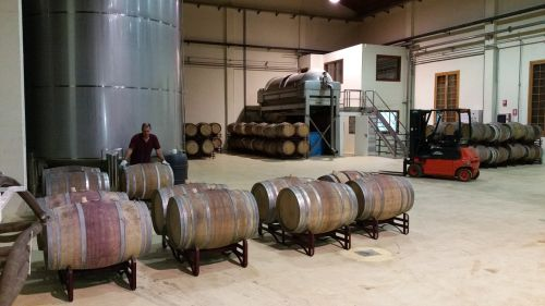 winery casks wine production
