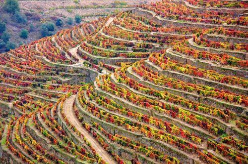 winery douro portugal