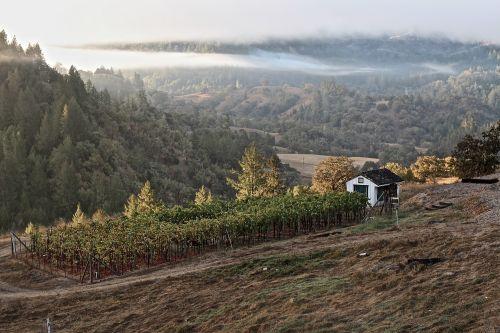 vyno fabrikas,vynas,Sonoma,Kalifornija,vyno taurė,vynmedis,vynuogynas,degustacija,įvykis,švesti,senas,kraštovaizdis,Sonomos slėnis,slėnis,vynuogės,kalnas,saulėtekis