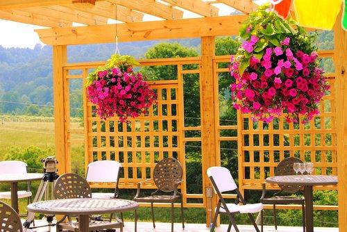 winery  nature  vineyard