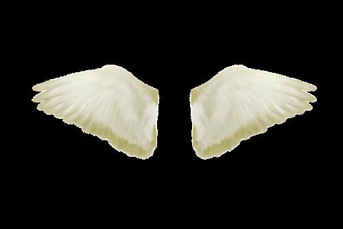 wings flight freedom