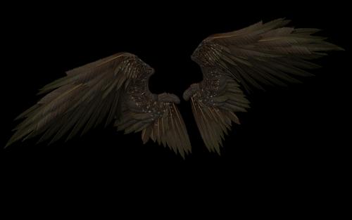wings  wing  angel