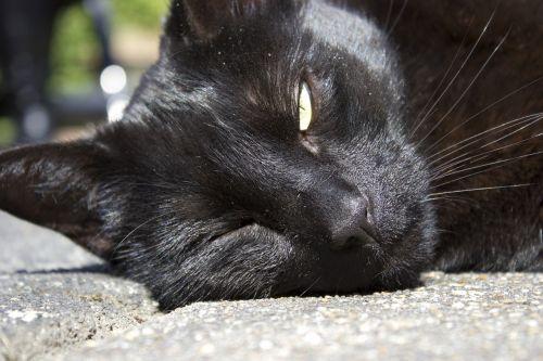 winking cat hot sun sleepy cat