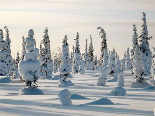winter frost forest