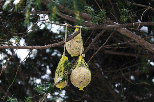 winter bird feeder bird feeding