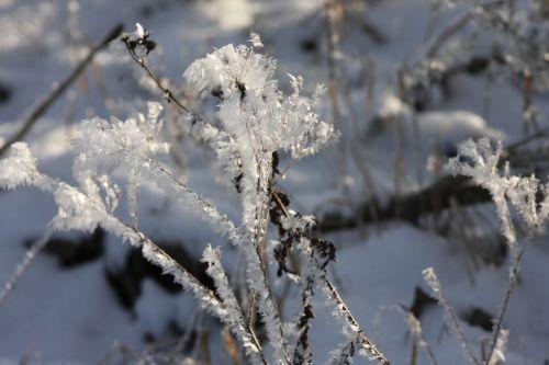 winter ice eiskristalle