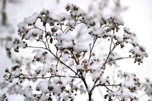 winter snowy snow