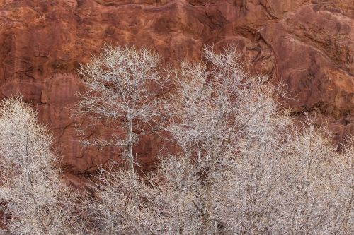 winter trees red rock