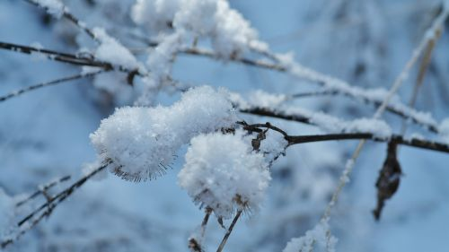 winter frost ice