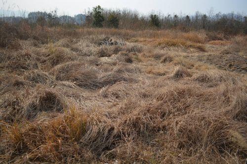 winter wilderness hay