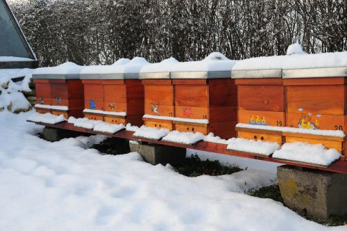 winter bee hives nature