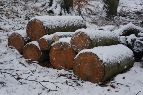 winter wood forest