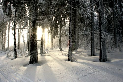 winter winter forest forest