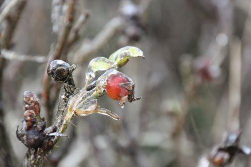 winter ice icicle