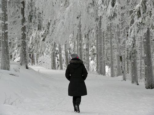 winter the winter's tale winter dream