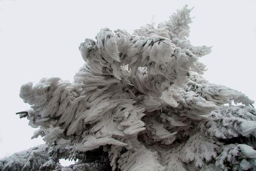 žiema,sniegas,žiemą,Hochrhoen,wasserkuppe,rhön žiema,snieguotas,sniego kraštovaizdis