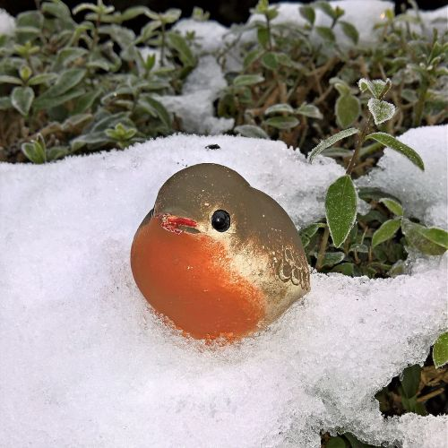 winter bird robin