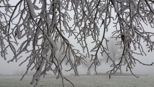 winter ripe branches