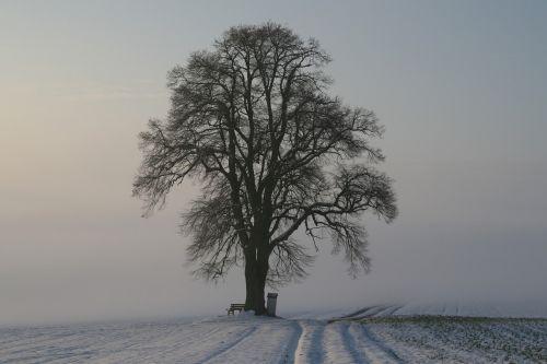 winter fog snow