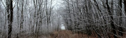 winter forest privacy