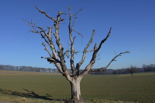 winter dead plant tree