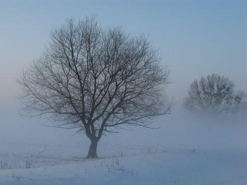 žiema,rūkas,mįslingas