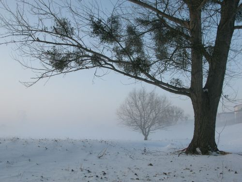 winter fog mysterious