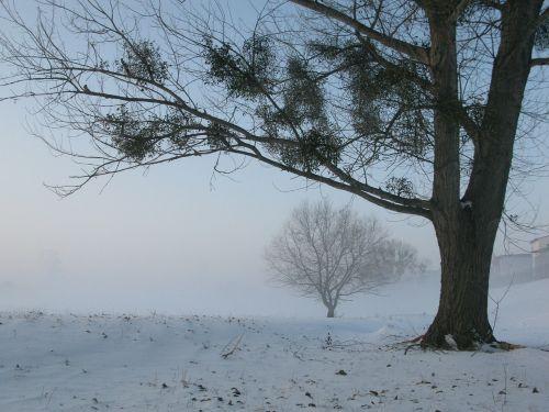 žiema,rūkas,mįslingas,medis