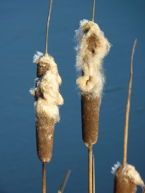 winter bank reed piston