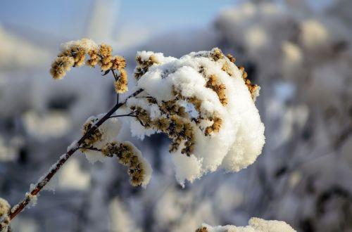 winter cold snowy