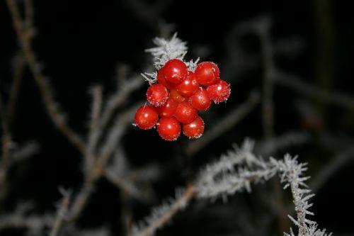 winter fruit fruits