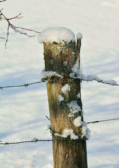 winter fence post snowy